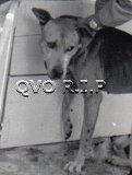 QVO RIP